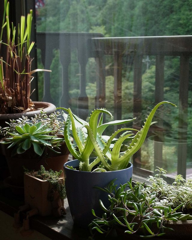 How to keep house plants alive and healthy - Plants in home ...
