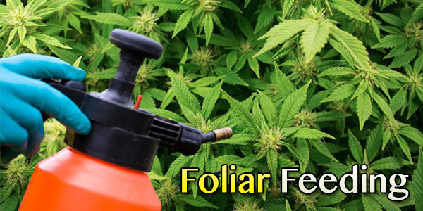 Foliar feed