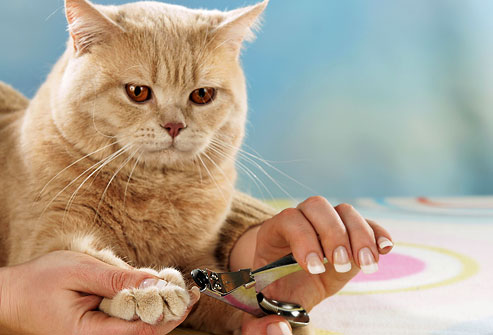 Nail clipper for animals